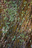 Lichen on the tree bark Stock Photography