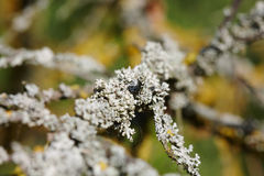 Lichen on tree branch Royalty Free Stock Photos