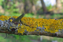 Lichen on tree branch Stock Photography
