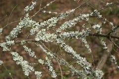 Lichen on a tree Stock Photos
