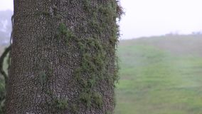 Lichen on a tree trunk in front of hillside. This region of Australia, sustains an indigenous ecology named `dry rainforest`, that is World Heritage listed as stock video