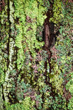 Lichen on tree trunk Stock Image