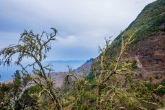 Lichen on trees in La Gomera. Lichen on the trees and mountain view at La Gomera, Canary islands royalty free stock images