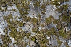 Lichen On una pared de la roca Fotos de archivo