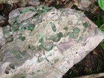 Lichen vert dans la roche Image stock