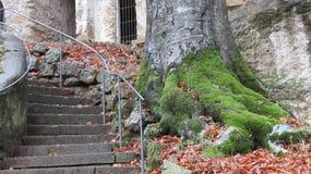 Lichen vert sur des racines d'arbre Image stock