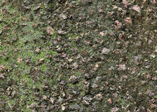 Lichen on wall Stock Image