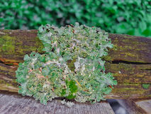 Lichen On Wood Fence Royalty-vrije Stock Afbeeldingen