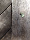 Lichen on wood. Lichen piece on wooden table Stock Images
