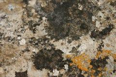 Lichene Immagine Stock Libera da Diritti