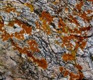 Lichene arancio su granito fotografia stock libera da diritti
