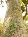 Lichene Crustose Fotografie Stock Libere da Diritti