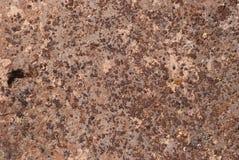Lichene del deserto sul basalto Immagine Stock