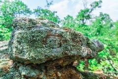 Lichene della roccia immagine stock