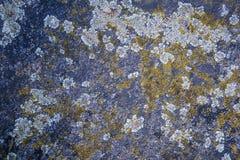 Lichene di struttura di Granit Fotografia Stock Libera da Diritti