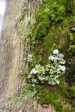 Lichene e muschio nell'estratto Fotografia Stock Libera da Diritti