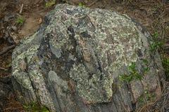 Lichene e vegetazione e Boulder fotografie stock