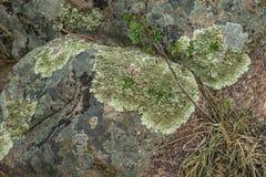 Lichene muscoso su roccia ruvida e grezza fotografia stock