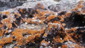 Lichene, Nuovo Galles del Sud, Australia Fotografie Stock