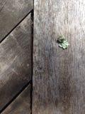Lichene su legno immagini stock