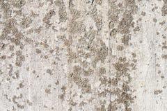 Lichene su un muro di cemento Fotografia Stock Libera da Diritti