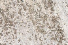 Lichene su un muro di cemento Fotografie Stock Libere da Diritti