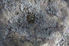 Lichene sulla pietra Immagini Stock Libere da Diritti