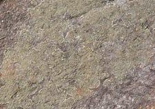 Lichene sulla pietra Fotografie Stock