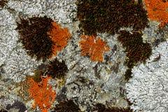 Lichene sulla roccia, grossglockner Immagini Stock
