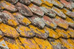 Lichene sulle mattonelle di terracotta sul tetto fotografia stock