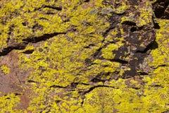 Lichene sulle rocce Immagini Stock