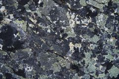 Licheni su roccia Fotografie Stock