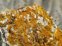 Licheni sulle rocce Fotografia Stock Libera da Diritti