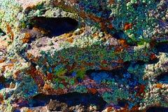 Licheni variopinti su un fondo della roccia Immagine Stock