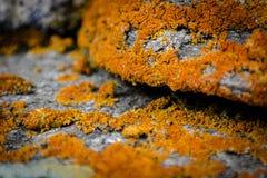 lichens foto de stock royalty free