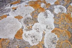 Lichens Stock Photo
