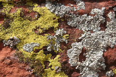 Lichens Royalty Free Stock Photography