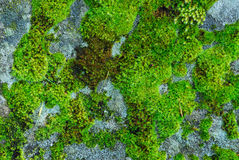 Lichens stock images