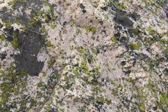 Lichens alpestres sur la roche Photos stock
