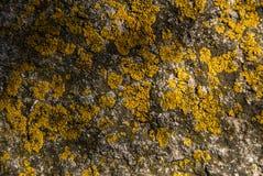 Lichens background Stock Image
