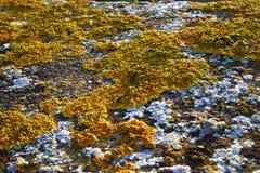lichens blancs et jaunes sur la pierre Photo stock