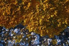 lichens blancs et jaunes sur la pierre Image libre de droits