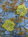 Lichens on bolder Royalty Free Stock Images