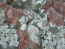 Lichens in colors on the stone Stock Photography