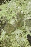 Lichens Crustose sur la roche de nouvelle Londres, New Hampshire Image stock