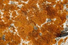 Lichens d'Ocre Photographie stock libre de droits