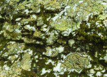 Lichens et mousse sur Boulder Photo stock