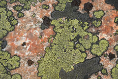 Lichens of green and black color on the stone,the granite.Texture. Royalty Free Stock Photography