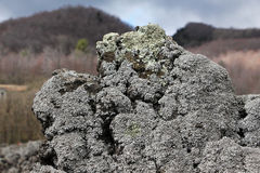 Lichens on a lava rock, from etna volcano Stock Photography