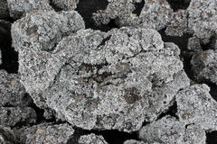 Lichens on a lava rock, from etna volcano Royalty Free Stock Images